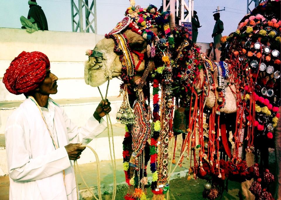 Leap_Hop_Blog_Pushkar_Rajasthan_Camel