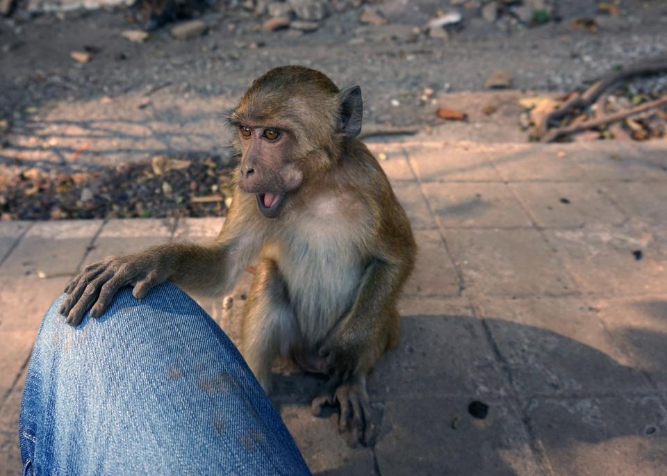 Leap_Hop_Blog_Myanmar_Emile_Monkey